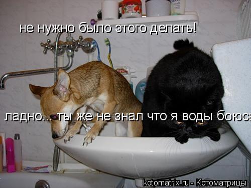Котоматрица: не нужно было этого делать! ладно... ты же не знал что я воды боюсь