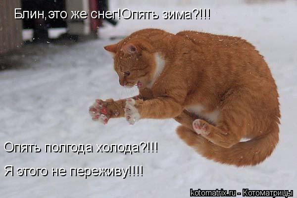 Котоматрица: Блин,это же снег!Опять зима?!!! Опять полгода холода?!!! Я этого не переживу!!!!