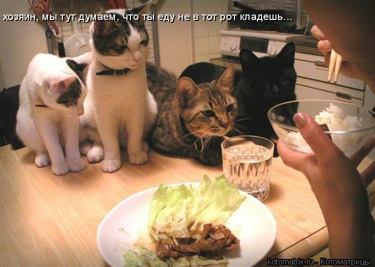 Котоматрица: хозяин, мы тут думаем, что ты еду не в тот рот кладешь...
