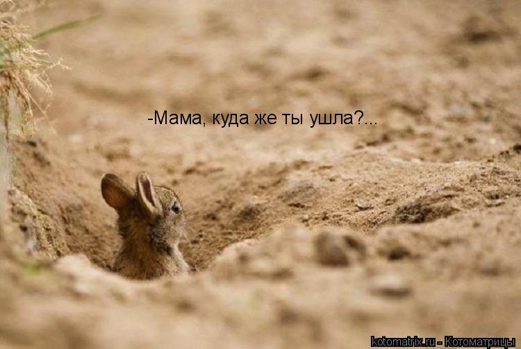 Котоматрица: -Мама, куда же ты ушла?...