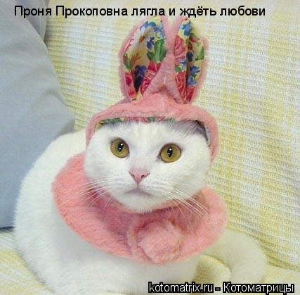 Котоматрица: Проня Прокоповна лягла и ждёть любови