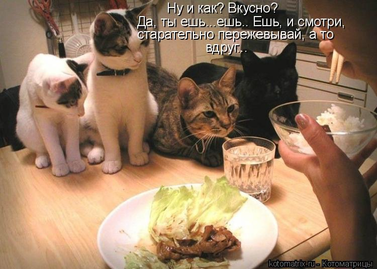 Котоматрица: Ну и как? Вкусно?  Да, ты ешь...ешь.. Ешь, и смотри,  старательно пережевывай, а то  вдруг...