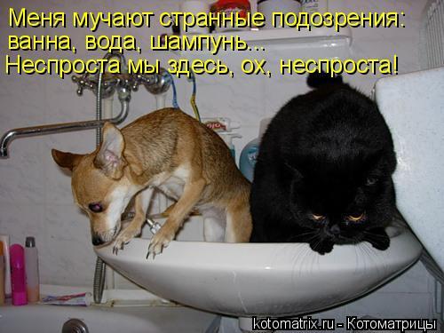 Котоматрица: Меня мучают странные подозрения: ванна, вода, шампунь... Неспроста мы здесь, ох, неспроста!