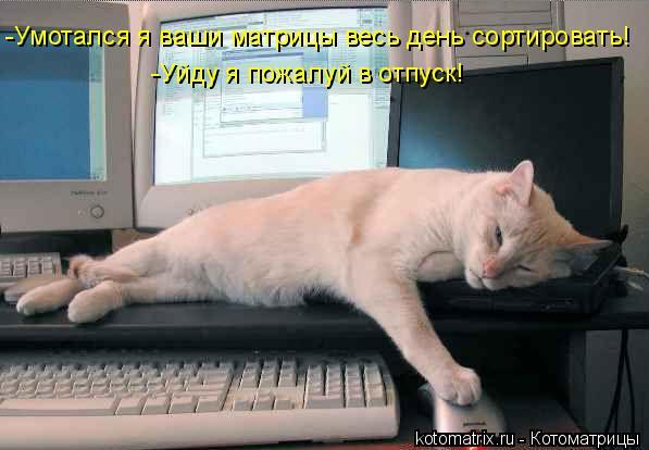 Котоматрица: -Умотался я ваши матрицы весь день сортировать!  -Уйду я пожалуй в отпуск!