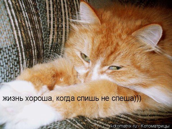 Котоматрица: жизнь хороша, когда спишь не спеша)))