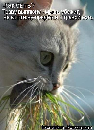 Котоматрица: -Как быть? Траву выплюну - мышь убежит, не выплюну-придётся с травой есть...