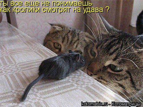 Котоматрица: ты все еще не понимаешь как кролики смотрят на удава ?