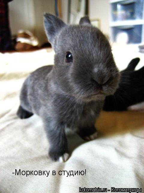 Котоматрица: -Морковку в студию!