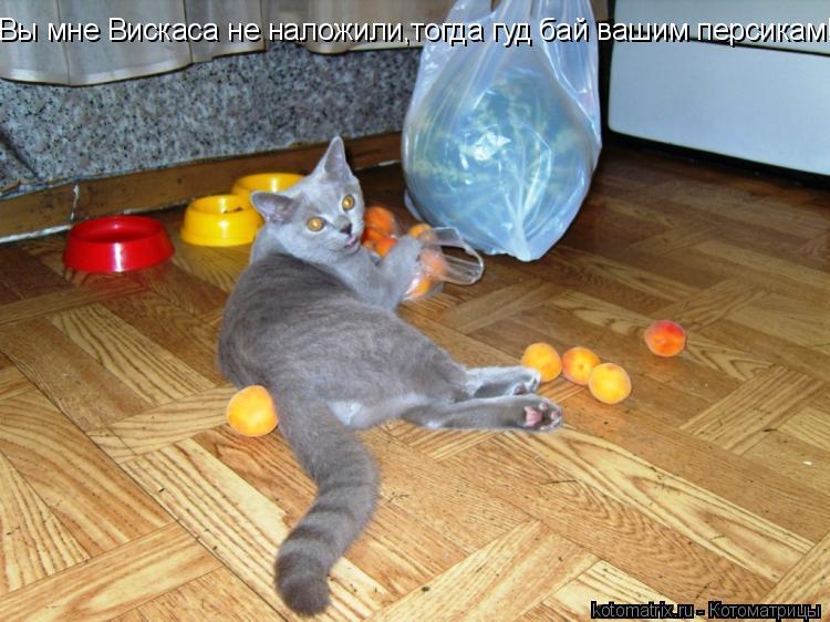 Котоматрица: Вы мне Вискаса не наложили,тогда гуд бай вашим персикам!!!