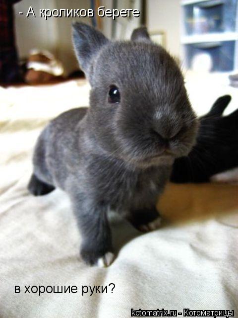 Котоматрица: - А кроликов берете в хорошие руки?