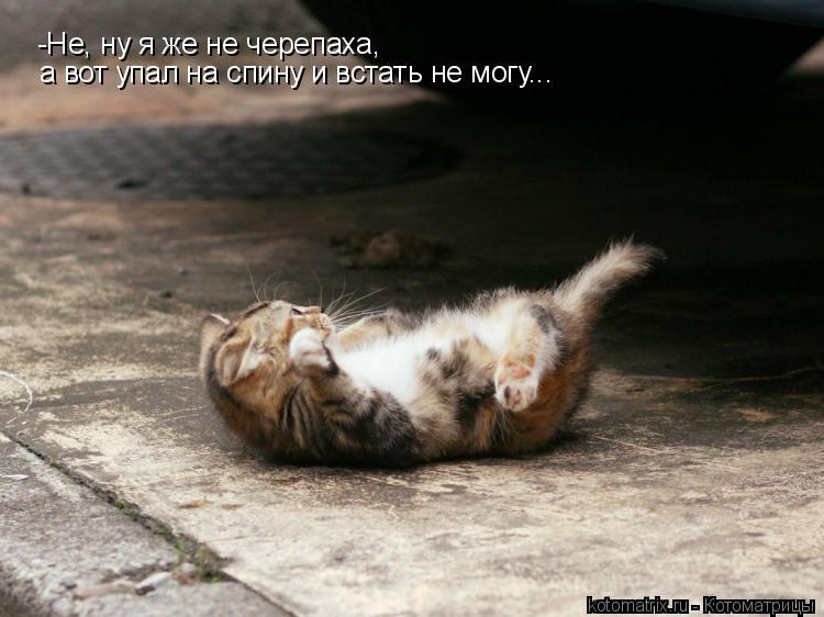 Котоматрица: -Не, ну я же не черепаха,  а вот упал на спину и встать не могу...