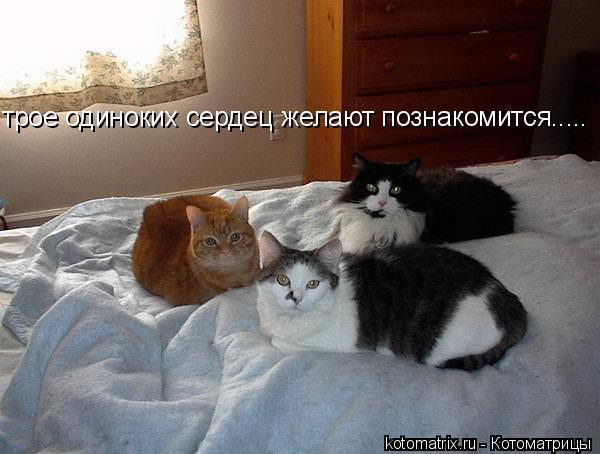 Котоматрица: трое одиноких сердец желают познакомится.....