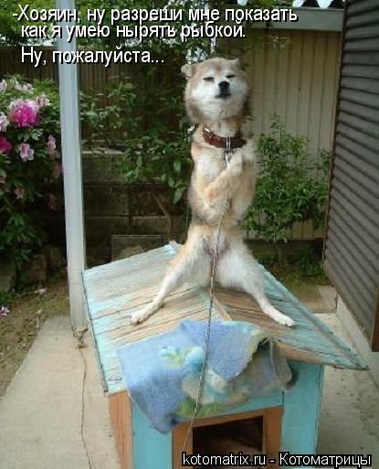 Котоматрица: -Хозяин, ну разреши мне показать как я умею нырять рыбкой. Ну, пожалуйста...
