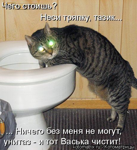 Котоматрица: Чего стоишь? Неси тряпку, тазик... ... Ничего без меня не могут, унитаз - и тот Васька чистит!