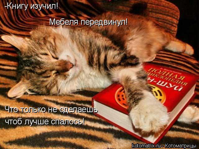Котоматрица: -Книгу изучил! Мебеля передвинул! Что только не сделаешь чтоб лучше спалось!