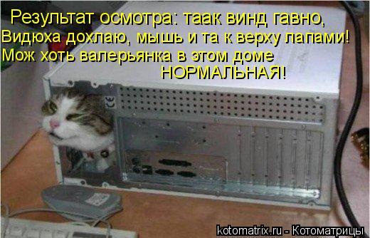 Котоматрица: Результат осмотра: таак винд гавно,  Видюха дохлаю, мышь и та к верху лапами! Мож хоть валерьянка в этом доме  НОРМАЛЬНАЯ!