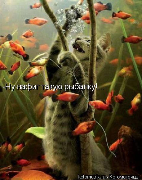 Котоматрица: -Ну нафиг такую рыбалку!...