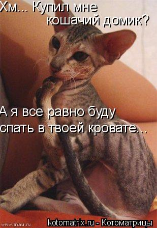 Котоматрица: Хм... Купил мне  кошачий домик? А я все равно буду  спать в твоей кровате...