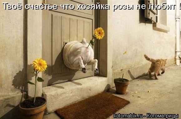 Котоматрица: Твоё счастье что хозяйка розы не любит !