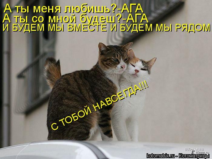 Котоматрица: А ты меня любишь?-АГА А ты со мной будеш?-АГА И БУДЕМ МЫ ВМЕСТЕ И БУДЕМ МЫ РЯДОМ С ТОБОЙ НАВСЕГДА!!!
