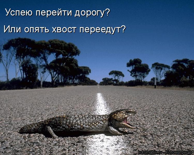 Котоматрица: Успею перейти дорогу?  Или опять хвост переедут?
