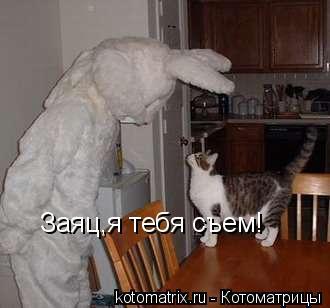 Котоматрица: Заяц,я тебя съем!