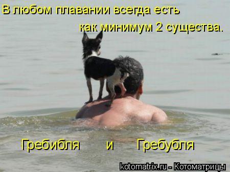 Котоматрица: В любом плавании всегда есть  как минимум 2 существа. Гребибля       и      Гребубля