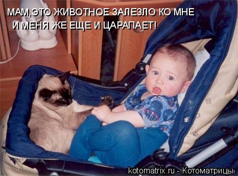 Котоматрица: МАМ,ЭТО ЖИВОТНОЕ ЗАЛЕЗЛО КО МНЕ И МЕНЯ ЖЕ ЕЩЕ И ЦАРАПАЕТ!