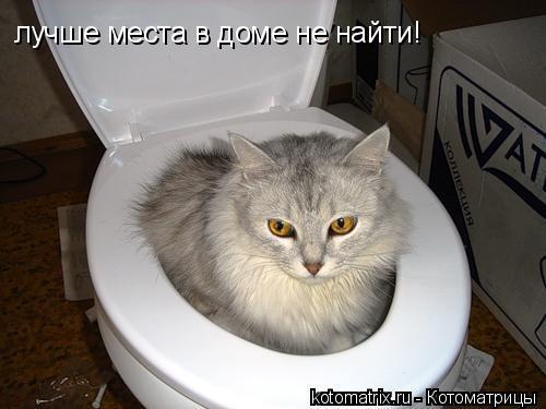 Котоматрица: лучше места в доме не найти!