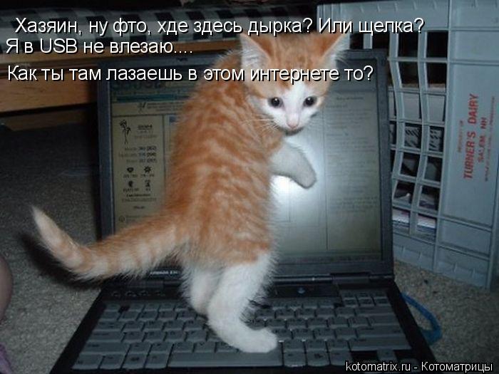 Котоматрица: Хазяин, ну фто, хде здесь дырка? Или щелка? Как ты там лазаешь в этом интернете то? Я в USB не влезаю....
