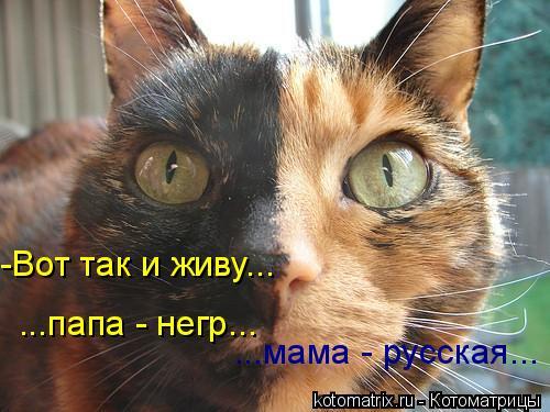 Котоматрица: -Вот так и живу... ...папа - негр... ...мама - русская...