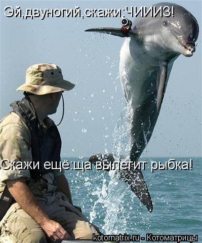 Котоматрица: Эй,двуногий,скажи:ЧИИИЗ! Скажи ещё:ща вылетит рыбка!