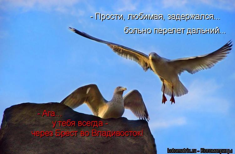 Котоматрица: - Прости, любимая, задержался... больно перелет дальний... - Ага... у тебя всегда - через Брест во Владивосток!