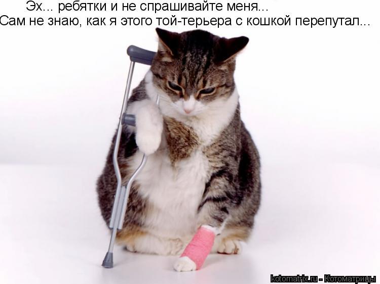 Котоматрица: Эх... ребятки и не спрашивайте меня... Сам не знаю, как я этого той-терьера с кошкой перепутал...