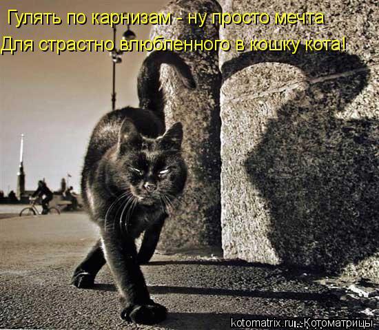 Котоматрица: Гулять по карнизам - ну просто мечта Для страстно влюбленного в кошку кота!