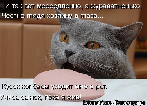 Котоматрица: ...И так вот меееедленно, аккурааатненько… Честно глядя хозяину в глаза... Кусок колбасы уходит мне в рот… Учись сынок, пока я жив!