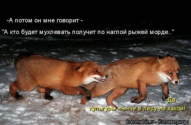 """Котоматрица: -А потом он мне говорит -  """"А кто будет мухлевать получит по наглой рыжей морде..""""  -Да,  культуры нынче в лесу ни какой!"""