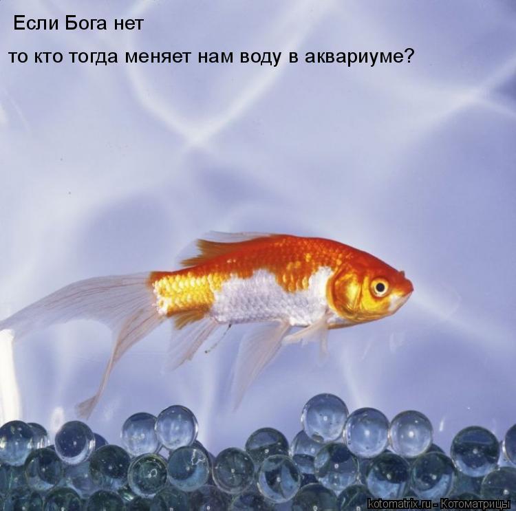 Котоматрица: Если Бога нет то кто тогда меняет нам воду в аквариуме?