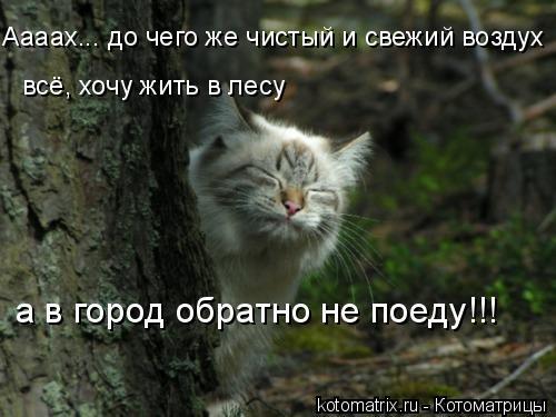 Котоматрица: Аааах... до чего же чистый и свежий воздух всё, хочу жить в лесу а в город обратно не поеду!!!