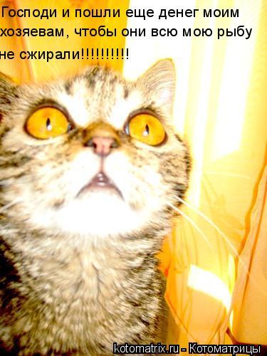 Котоматрица: Господи и пошли еще денег моим хозяевам, чтобы они всю мою рыбу не сжирали!!!!!!!!!!