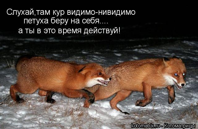 Котоматрица: Слухай,там кур видимо-нивидимо петуха беру на себя.... а ты в это время действуй!