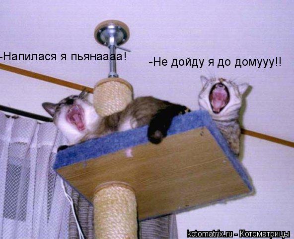 Котоматрица: -Напилася я пьянаааа! -Не дойду я до домууу!!