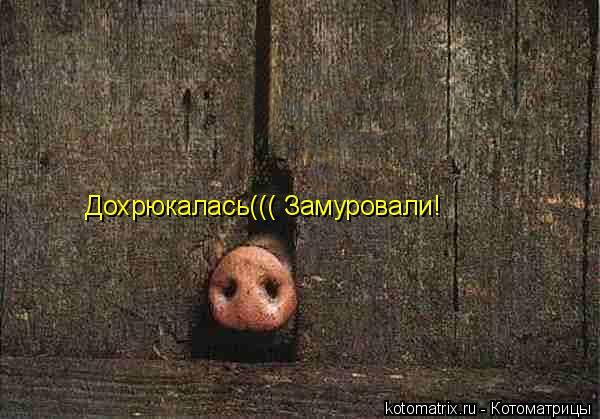 Котоматрица: Дохрюкалась((( Замуровали!