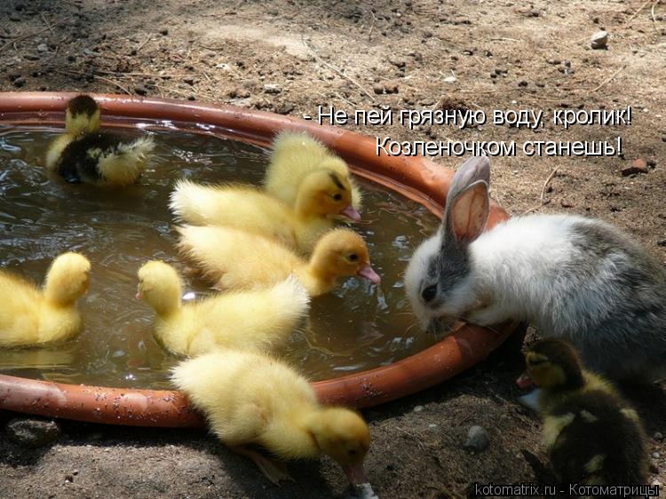 Котоматрица: - Не пей грязную воду, кролик! Козленочком станешь!