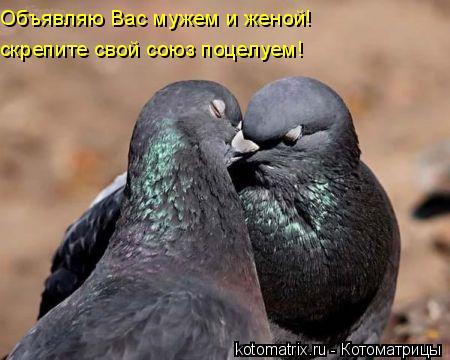 Котоматрица: Объявляю Вас мужем и женой! скрепите свой союз поцелуем!