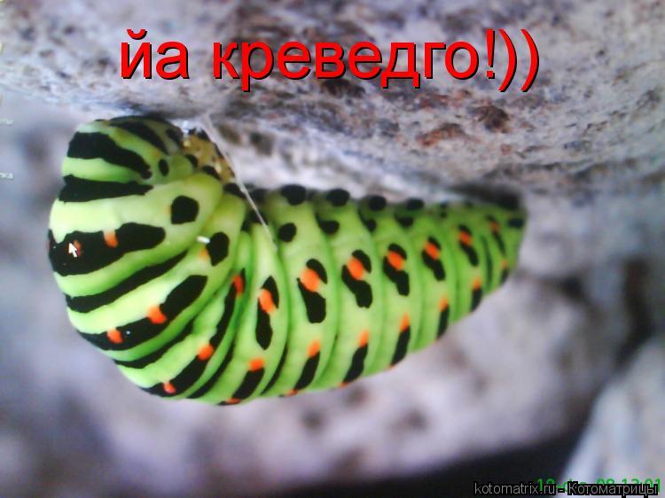 Котоматрица: йа креведго!))