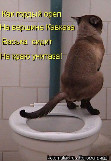 Котоматрица: Как гордый орел На вершине Кавказа Васька  сидит На краю унитаза!