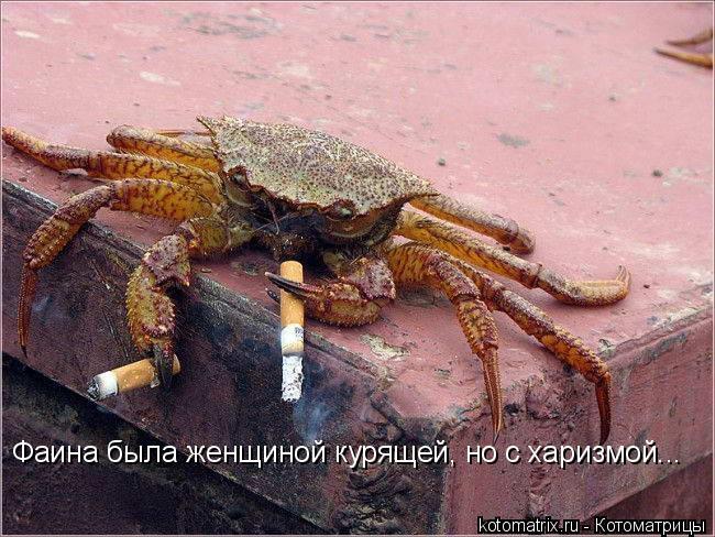 Котоматрица: Фаина была женщиной курящей, но с харизмой...
