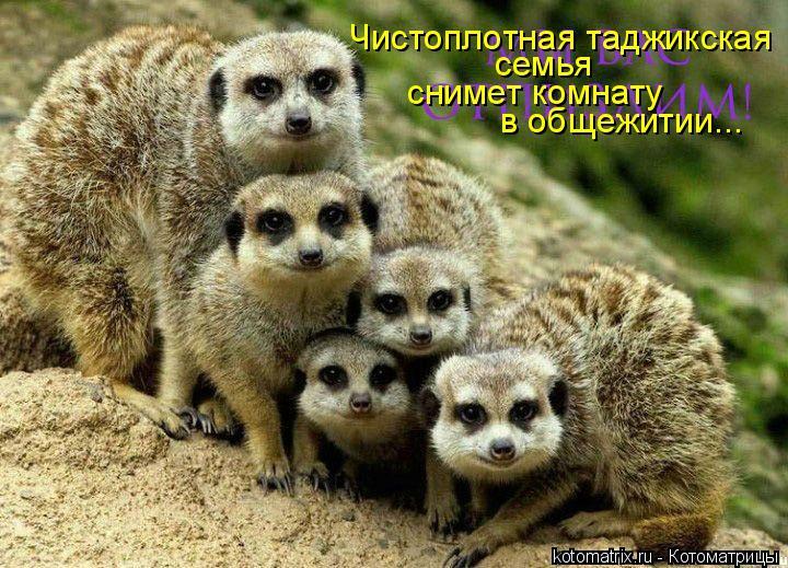 Котоматрица: Чистоплотная таджикская  семья снимет комнату в общежитии...