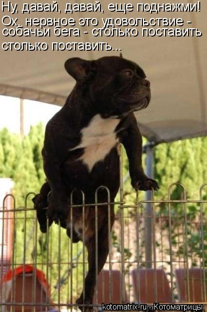 Котоматрица: Ну, давай, давай, еще поднажми! Ох, нервное это удовольствие -  собачьи бега - столько поставить столько поставить...